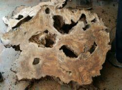עץ טיבעי